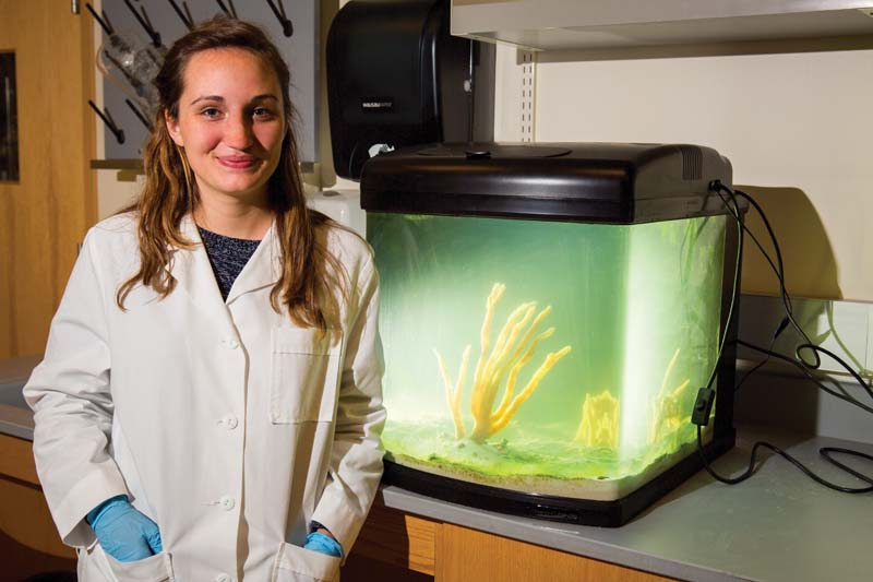 Savannah Barnett '15 has been intrigued by the process of extracting anti-cancer compounds  from marine sponges since she came across in the topic in a high-school biology class.