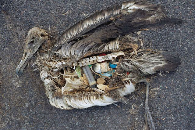 Trash that has found its way to the ocean can be deadly to wildlife.